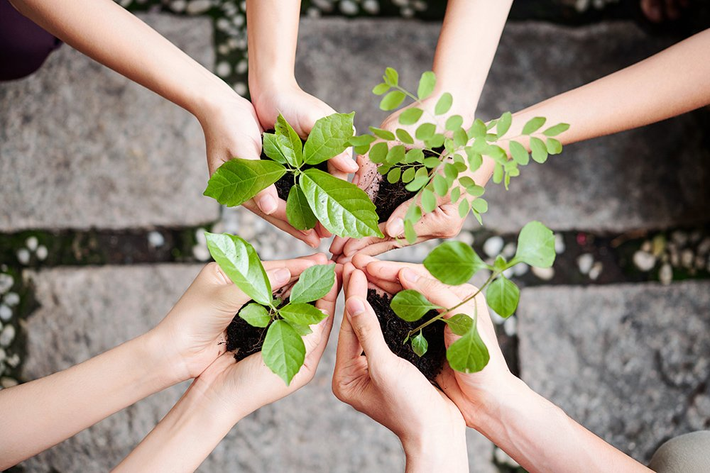 care-of-plants-GWUHB54-1.jpg